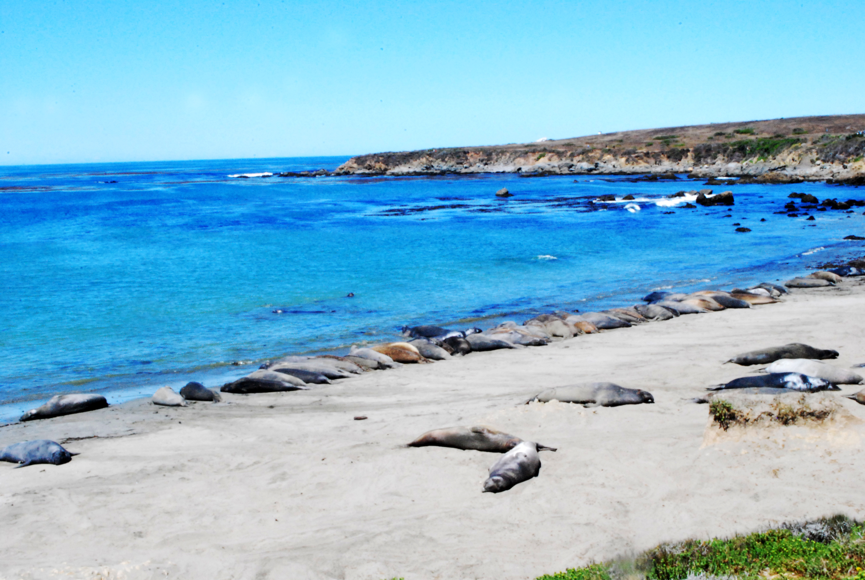 Highway 1 seals