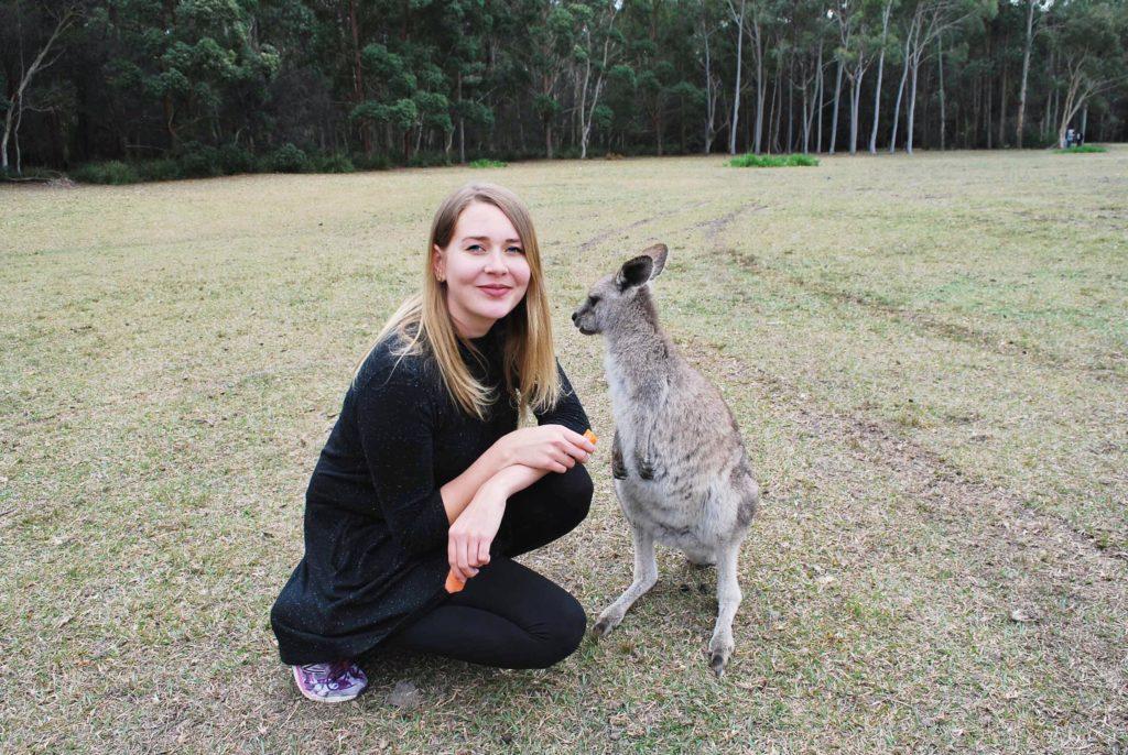 Wild Kangaroo Morisset Park